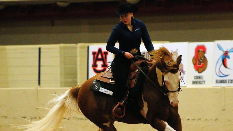 Dusha named NCEA Elite Equestrian