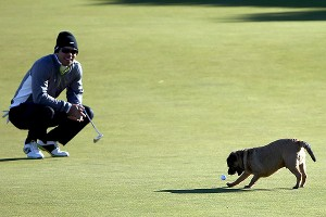 A dog ran off with Paul Casey's ball in his mouth on the 12th green during the Alfred Dunhill Links Championship.
