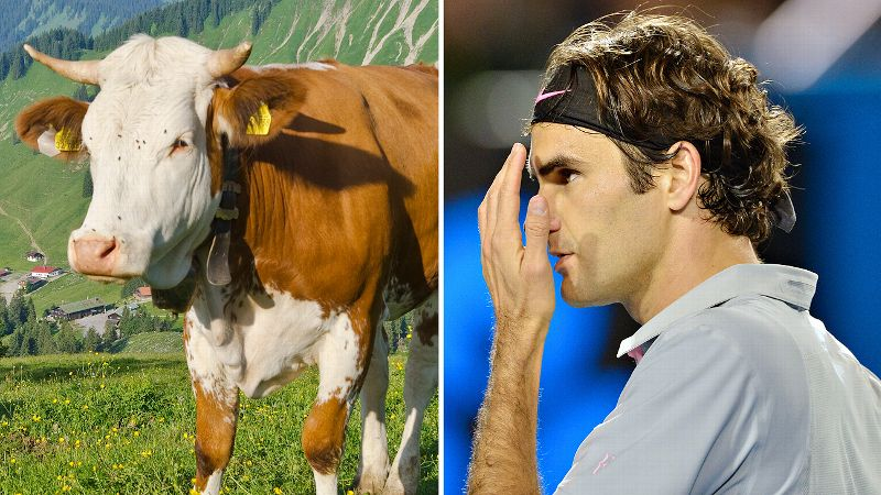 He is perhaps Switzerland's most beloved son. So of course the Swiss Open organizers were delighted when Roger Federer announced he would be playing in the July tournament for the first time since 2004. But giving him a real-life mooing cow as a present? Not so much. The former No. 1 took it in stride and shared his big plans for the Federer family's new pet. She wont be in my trophy room, thats for sure, he said. Well find a good solution, she needs a nice place and enough to eat. Even more surprisingly, it was the second cow Federer received from the tournament. He also was presented with one in 2003 after winning Wimbledon. Is this a Swiss way of saying thank you or congratulations? Were just not sure. (Photos: Getty Images)