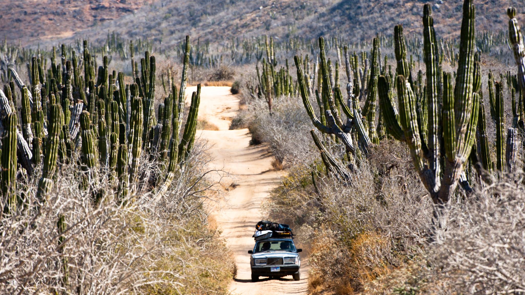 Baja Sur, Mexico