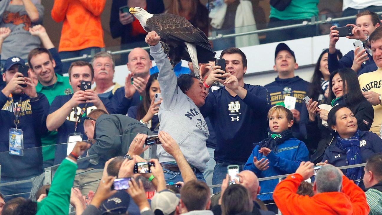 6bae7e59560 Bald eagle lands on arm of helpful Notre Dame fan at Cotton Bowl