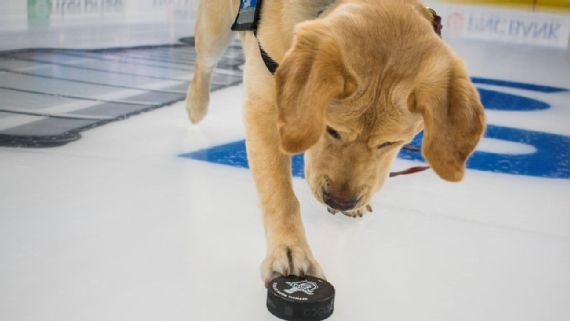 Meet Barclay, the St  Louis Blues' dog training for a