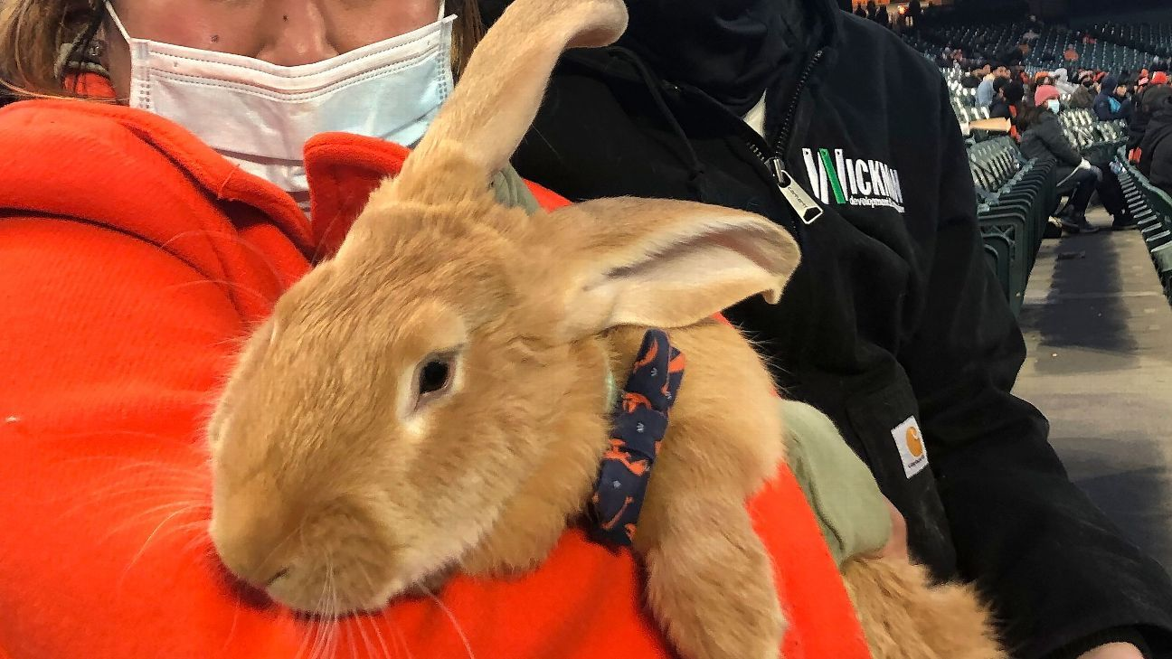 Therapy bunny in stands a hit at Giants' ballpark thumbnail